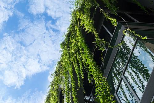 Blog axis arquitectura for Muros verdes beneficios